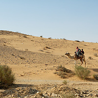 Sinai Wilderness and Coasts