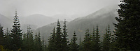 Snow fills the air heralding the end of Autumn weather conditions making the distant forested mountains into silhouettes - Tahoma State Forest looking south toward the Gifford Pinchot National Forest in the Cascade Mountain Range of Washington state, USA pan