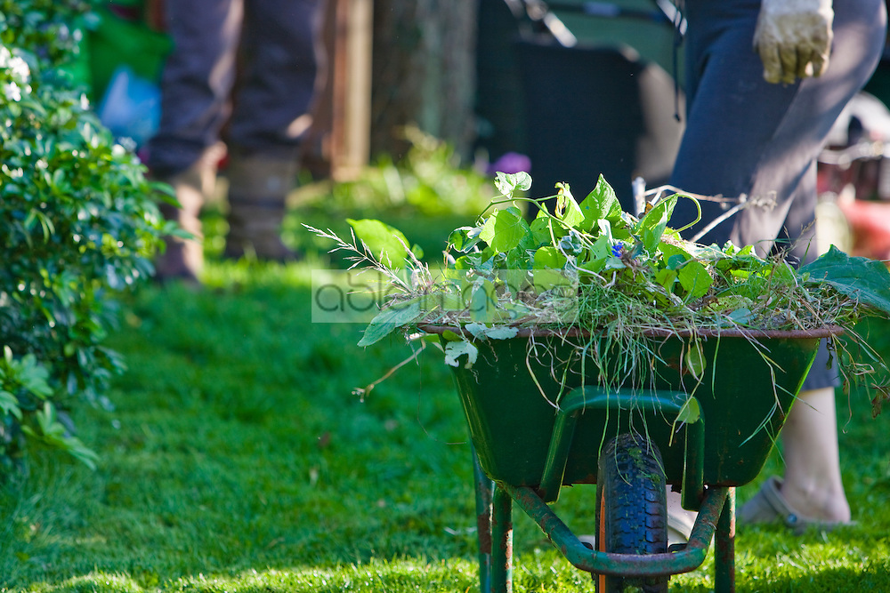 Close up of a wheelbarrow filled with weeds