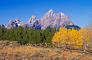 Wooden fence and fall aspens under the Grand Tetons, Grand Teton National Park, Woming