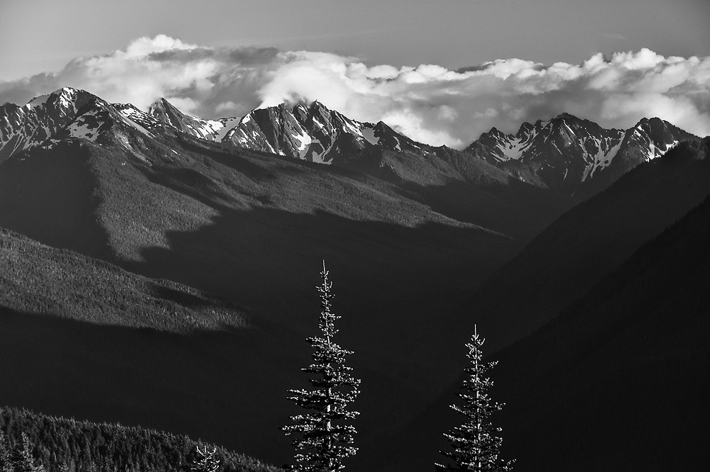 Fir tree crowns, afternoon light, August, Elwha River Valley and headwaters, view from Hurricane Ridge, Olympic National Park, Washington, USA