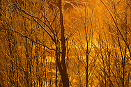 Midwinter light in -39 degrees, at Järämä, Övre Soppero, Lapland, Laponia, Norrbotten county, Sweden