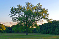Old Westbury, New York, U.S. June 23, 2021. Old Westbury Gardens estate grounds are once again open to visitors, with certain Covid-19 related restrictions, the summer of 2021.