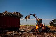 Carneirinho_MG, Brasil...Plantacao de cana-de-acucar em Carnerinho, Minas Gerais...The sugar cane agriculture in Carneirinhos, Minas Gerais...Foto: LEO DRUMOND / NITRO