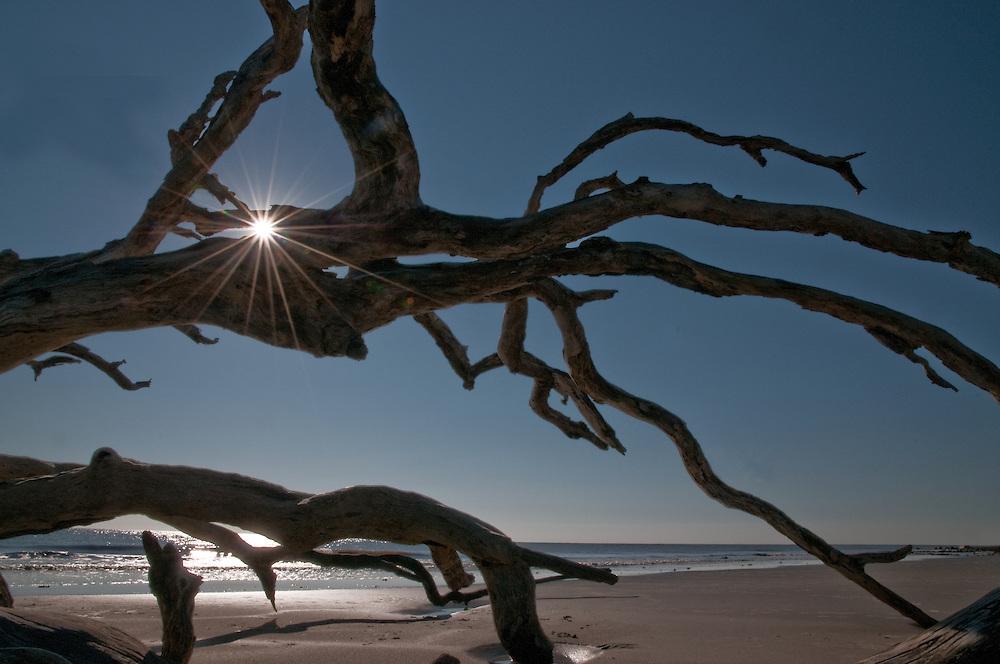 Driftwood with Starburst
