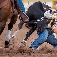070513       Cable Hoover<br /> <br /> Glen Clark digs in his heals on his way to a 4.5-second steer wrestling finish during the PRCA rodeo in Window Rock Friday.