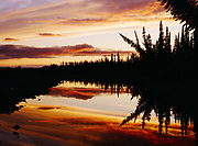 Sunset reflected in white spruce-lined slough along the Noatak River just upstream from the Kelly River, Noatak National Preserve, Alaska.