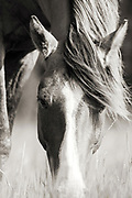 """""""Life can only be understood backwards; but it must be lived forwards""""  ~ Soren Kiekegard<br /> <br /> Tracie Spence's fine art photography series of The Spanish Wild Mustangs."""