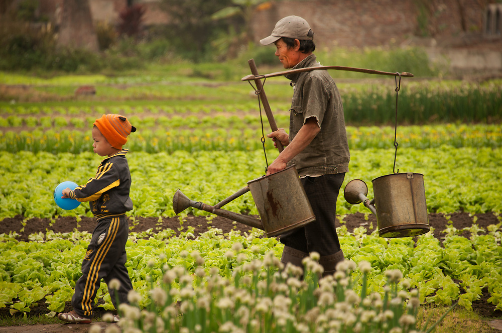 A father and son work the rice fields about an hour from Ha Long Bay, Vietnam