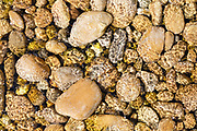 Drôme, Frankrijk - augustus 2021: Rivierstenen op de bodem van het riviertje l'Herbasse bij Charmes sur l'Herbasse | River stones at the bottom of the river l'Herbasse near Charmes sur l'Herbasse