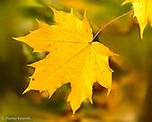 Fall at Green Lake