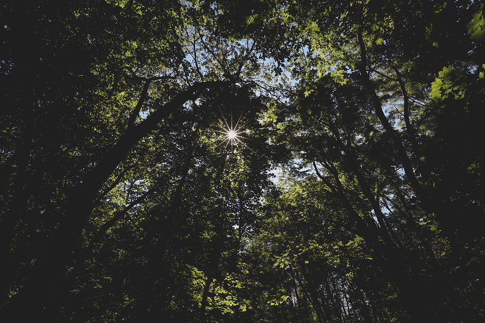 Summertime sunlight shining through the forest canopy within Minuteman National Park.