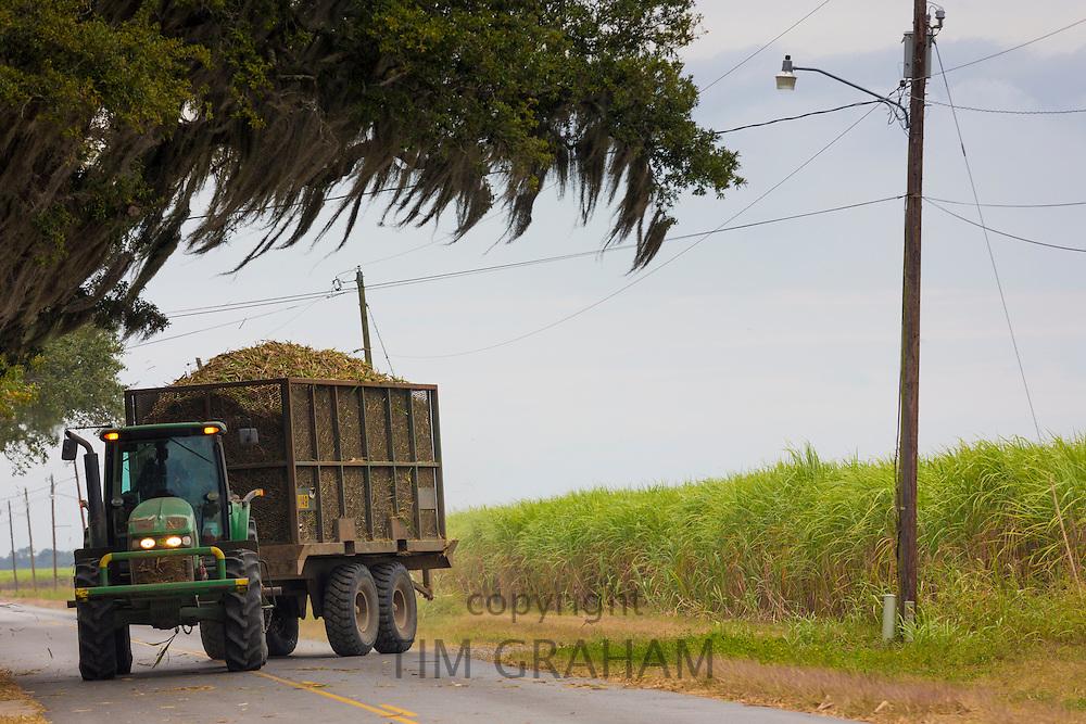 Transporting sugarcane during harvesting in the Fall at plantation along the Mississippi at Baldwin, Louisiana, USA
