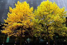 2019-10-30-Trees
