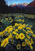 Columbia Basin Wildflowers