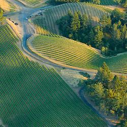 Aerial views of Napa Valley Vineyards,  Northern California.