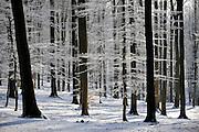 Ronse, Belgium, Jan 09, First snow, PHOTO © Christophe Vander Eecken