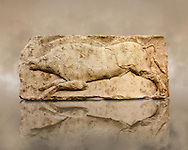 """Wild Boar from the """"Satyr Hunting Wils Animals, freezes, 460 B.C.  From Xanthos, UNESCO World Heritage site, south west Turkey. A British Museum exhibit GR 1848-10-20-2-9 (sculpture B 2902- 298). .<br /> <br /> If you prefer to buy from our ALAMY PHOTO LIBRARY  Collection visit : https://www.alamy.com/portfolio/paul-williams-funkystock/lycian-antiquities.html (TIP - Refine search by adding a suject or background colour as well).<br /> <br /> Visit our CLASSICAL WORLD HISTORIC SITES PHOTO COLLECTIONS for more photos to download or buy as wall art prints https://funkystock.photoshelter.com/gallery-collection/Classical-Era-Historic-Sites-Archaeological-Sites-Pictures-Images/C0000g4bSGiDL9rw"""