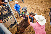 14 JULY 2012 - OAK SPRINGS, AZ:   A Navajo boy learns to ride a bucking steer Saturday afternoon on the last day of a bull riding class at the Aspen Canyon Rodeo Club in Oak Springs. The bull riding class was offered by the Crooked Horn Cattle Co. in the community of Oak Springs on the Navajo Nation, about 15 miles south of Window Rock, AZ. Eleven cowboys signed up for bull riding classes and one signed up for bull fighting classes. The bull riding class started with lessons on a mechanical bucking machine before the cowboys rode bulls.    PHOTO BY JACK KURTZ