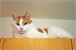 Cat On Top Of Cabinet