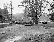 delay481104-3. Log and debris from storm piled up at Salem Ave. and Kiwanda creek. Neskowin Crest in background. November 4, 1948.