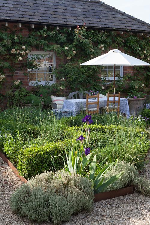 Kitchen Garden laid out with weaving Box Hedges, Allium sphaerocephalon, Herbs and Irises. Manor Farm, Cheshire, U.K.