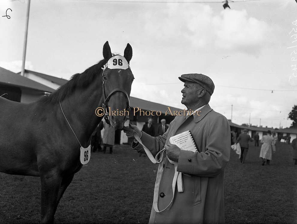 """19/09/1960<br /> 09/19/1960<br /> 19 September 1960<br /> Goffs September Bloodstock Sales at Ballsbridge, Dublin. The Ballsbridge September Yearling Sales opened in Dublin and attracted many international racing personalities. Picture shows Mr Neil McCarthy, California, with a chestnut yearlingg filly, sired by """"Alycidon"""" out of """"June Ball"""", which he bought for 6,200 Guineas, the highest price of the day, sent up by Mr J.P. Frost, Limericl."""