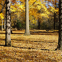"""""""Reaching my Peak"""" <br /> <br /> Beautiful fall color both in the trees and on the ground in a local park in Michigan. Peak fall color lasts for such a short period of time, we must get out and enjoy it as much as possible!"""