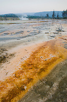 Thermophilic algae and bacteria color the waters in Biscuit Basin, Yellowstone National Park