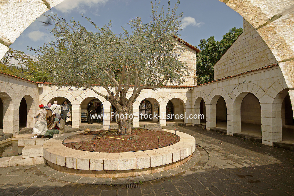 Israel, Sea of Galilee, Tabgha, Church of the Multiplication of Loaves and Fishes