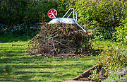 Pile garden waste held down by metal wheelbarrow - collections suspended due to Coronavirus Covid 19, Suffolk, England