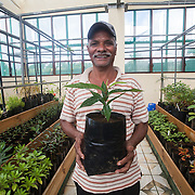 One of the botanists who works in the Endemic Plant Nursery run by National Parks and Conservation Service in Mauritus. Here he holds his favorite critically endangered plant in a room that is full of the most endangered plants in the island. These plants are used to restore native forest on mainland Mauritius and on islets.