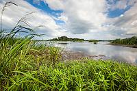 Freshwater marsh at the Savannah National Wildlife Refuge.