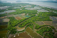 Aerial view of mangroves, rivers, and shrimp ponds in the Sungai Petani area, Malaysia.