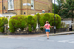 A woman admires an elephant topiary hedge at the corner of Ambler and Romilly Roads in Finsbury Park, much beloved of local residents, is under threat after it has been claimed that drug users are using the cover of the elephants. The ground floor flat at the address has been boarded up following a police raid and eviction of tenants who, according to neighbours, were using the flat as a drugs den . London, August 12 2019.