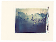 Dinka man tending cattle, South Sudan<br /> Image size 4x5, Matted 12x10 Edition of 25 <br /> Archival Pigment Print