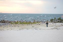 Boy Running After Laughing Gulls
