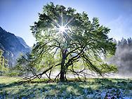 Yosemite, Ca - 2015: Cooks Meadow at Sunrise.
