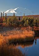 Alaska. Morning reflection of Mt. McKinley in the autumn setting of Wonder Lake, Denali National Park.