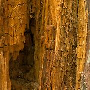 Rotting Tree in Breakheart Reservation, Wakefield, MA