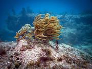 Molasses Reef, Key Largo, Florida