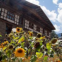 Asia, Bhutan, Thimpu. Sunflowers and Bhutanese architecture.
