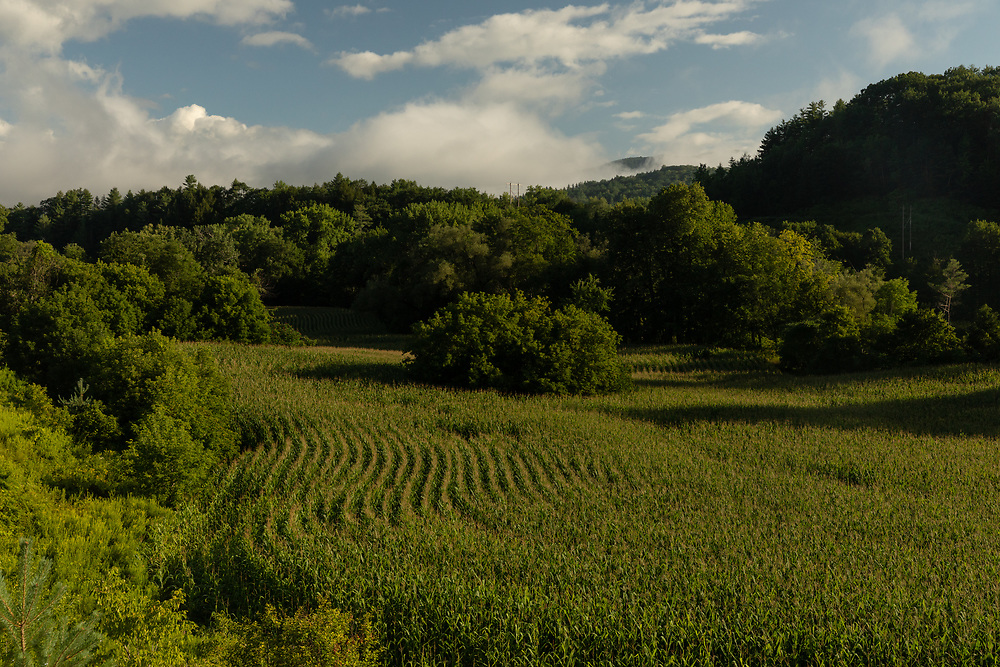 Morning sunlight illuminating an expansive cornfield along on the rolling hills of the Vermont landscape.