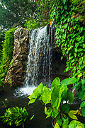 Waterfall at the Singapore Botanic Gardens, Singapore, Republic of Singapore