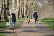 People are seen walking their dogs in Hyde Park, central London on Sunday, March 14, 2021. Many people appear to defy coronavirus restriction guidelines to wear a face mask whilst sharing a space with other members of the public. (VXP Photo/ Vudi Xhymshiti)