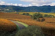 Vineyards in fall at Silver Oak Cellars, Alexander Valley, Sonoma County, California