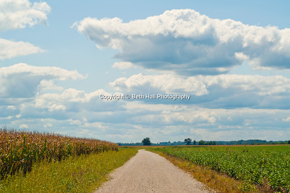 Soybean plants grow in a field against a cloudy blue sky.