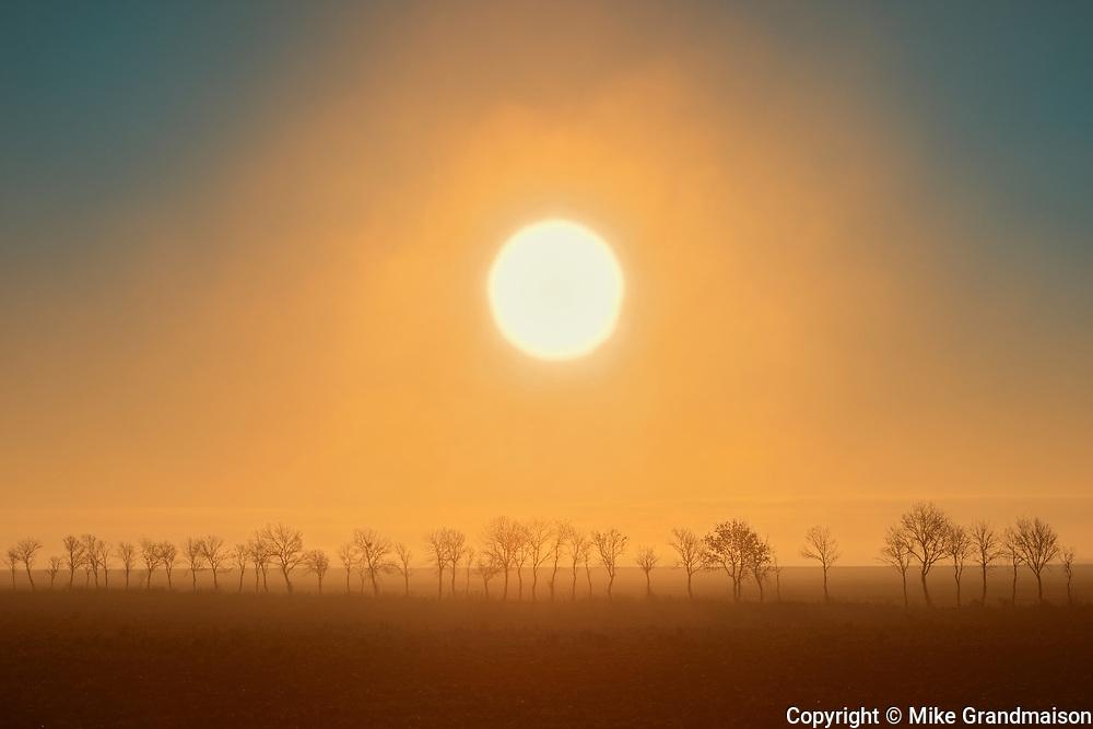 Fog at sunrise over shelterbelt trees, Altona, Manitoba, Canada