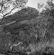 Landscape Unknown