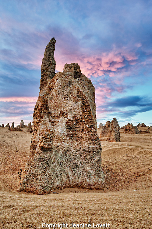 The raw material for the limestone of the Pinnacles came from seashells in an earlier epoch rich in marine life. These shells were broken down into lime rich sands which were blown inland to form high mobile dunes.